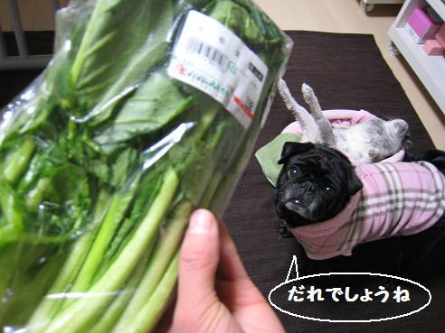 2002-小松菜2新