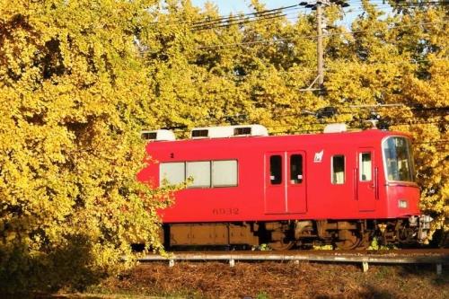 祖父江のイチョウと赤い名鉄電車 その1