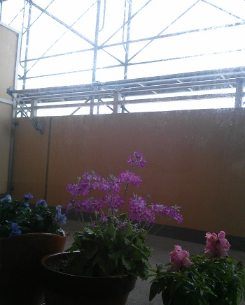 gardening43.jpg