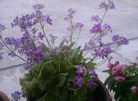 gardening59.jpg