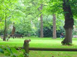 イギリスの森の公園