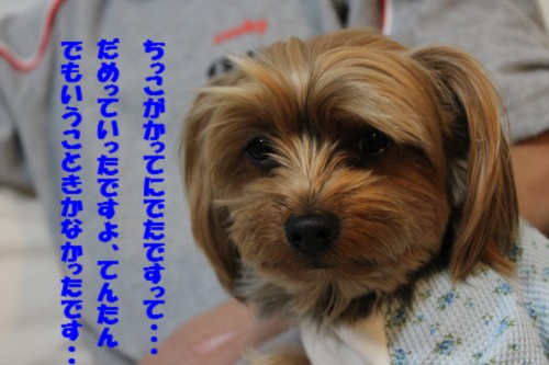IMG_3924.jpg