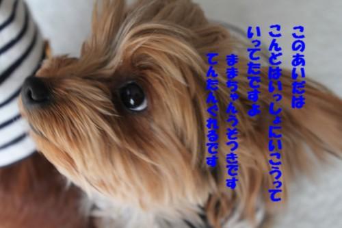 IMG_4138.jpg