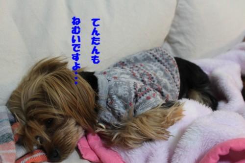 IMG_4178.jpg