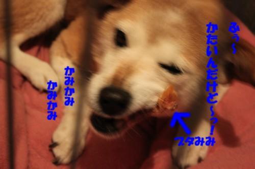 IMG_4749.jpg