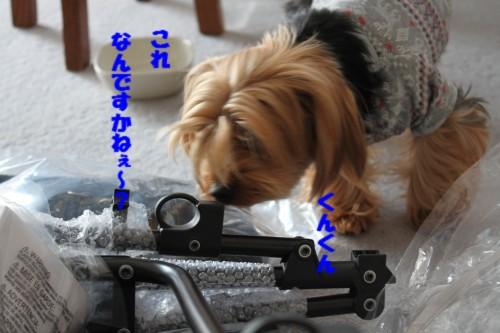 IMG_5834.jpg