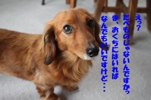 IMG_6077.jpg