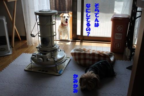 IMG_6499.jpg