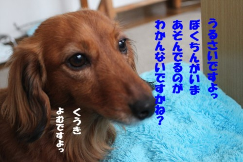 IMG_6667.jpg