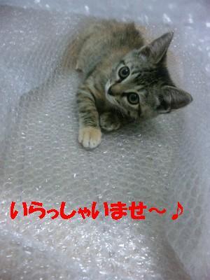 20111216_7.jpg