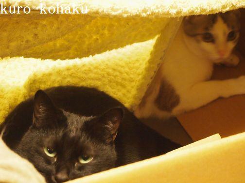 kurokohaku1_201402021045464b0.jpg