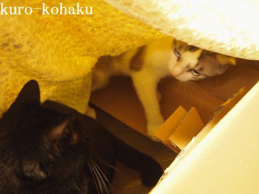 kurokohaku3.jpg