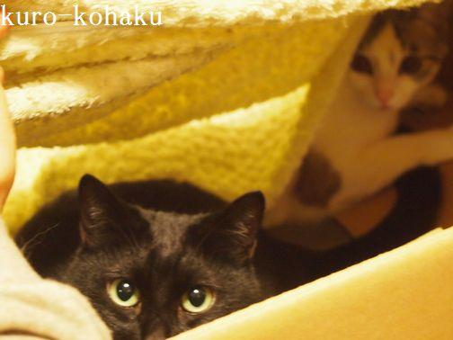kurokohaku_20140202104548f72.jpg