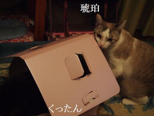 kurokohaku_20140216174601689.jpg