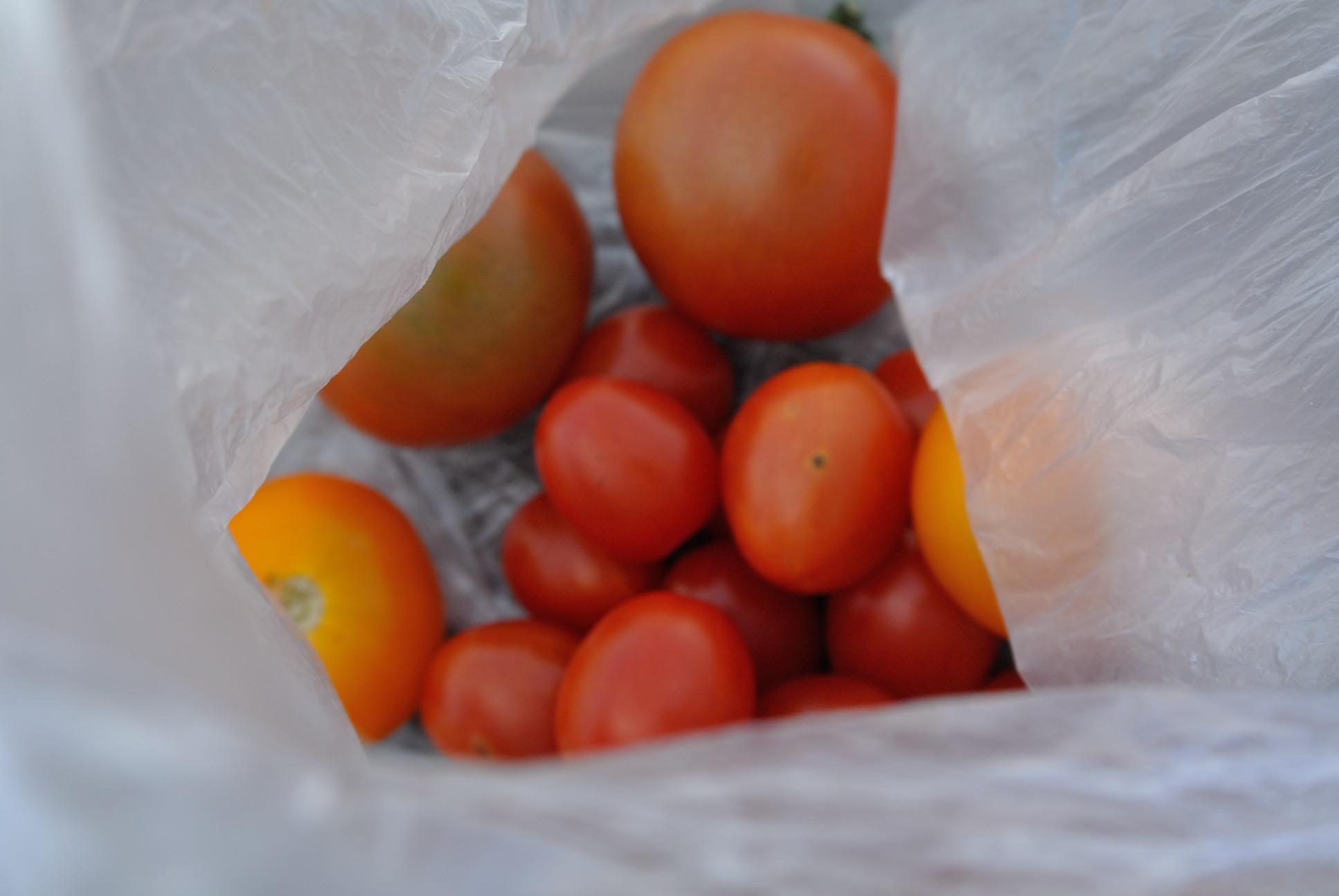 トマト貰った