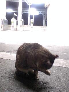 駅ネコ (3)