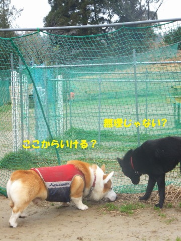 DSCF79610002.jpg