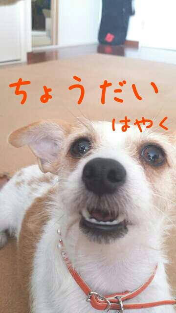 fc2blog_20121022211251b98.jpg