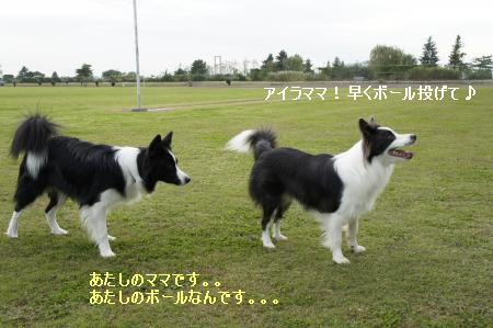 ボール遊び~