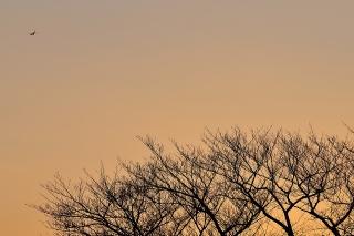 飛行機と樹