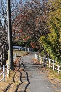 明治池と柱大池の間の道