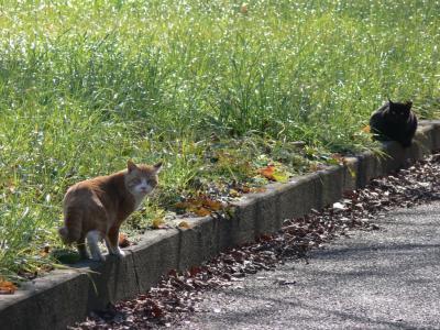 散歩の途中の猫、緊張が走る!