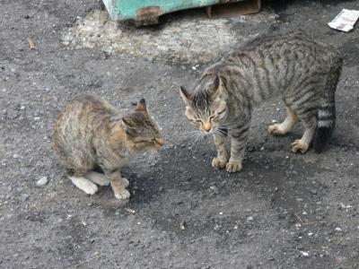 ネコさま その5