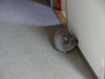 壁舐めネズミ参上!