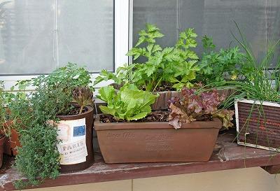 出窓プチ菜園