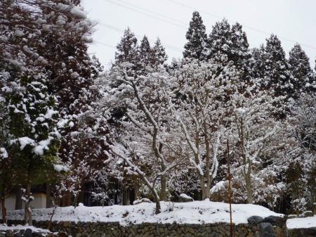 小知谷雪の花2