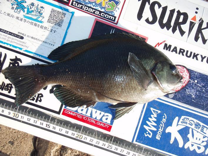 2011.12.20桜島避難港3番 057a