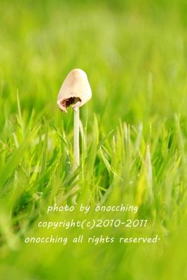 2011_1009_120007-IMG_3806.jpg