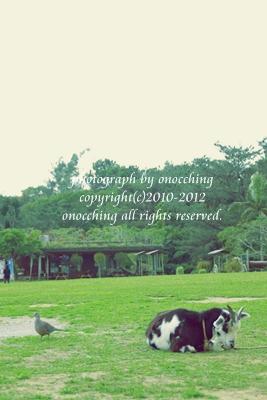 2012_0213_150441-IMG_4501.jpg