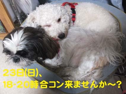 01_20121222124315.jpg