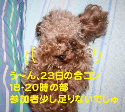 1_20121220211338.jpg
