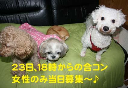 1_20121223032849.jpg