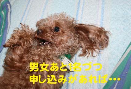 2_20121220211337.jpg