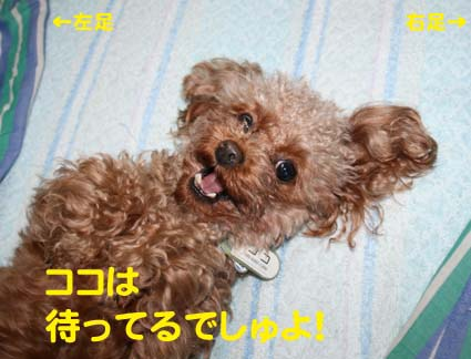 3_20121220211336.jpg