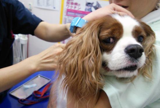 狂犬病ワクチン14101