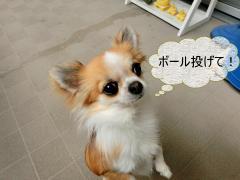 CIMG0876+-+繧ウ繝斐・_convert_20120331211948