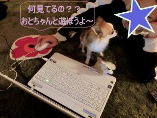 CIMG0459_convert_20120303185231.jpg