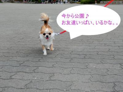 CIMG1136_convert_20120423202509.jpg