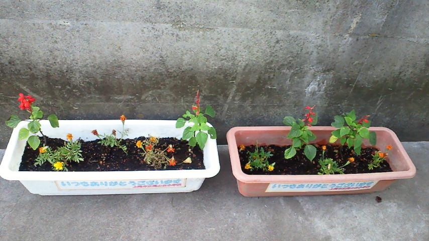 20120627flower.jpg
