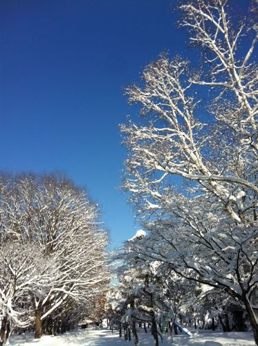 雪の木−3