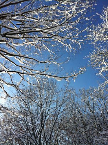 雪の木−2