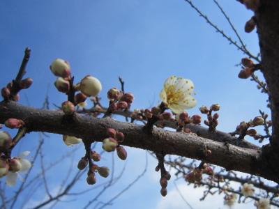 梅も咲いてはいなかった・・・