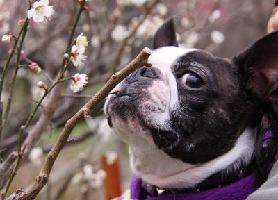 やっと春を満喫しました!!