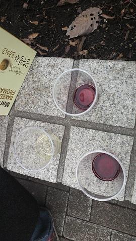 winesiin.jpg