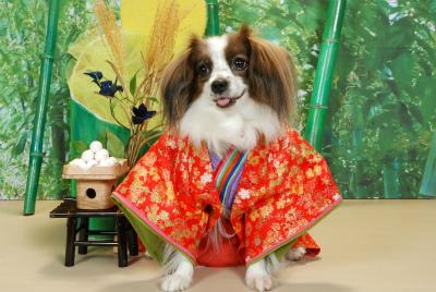 かぐや姫(9月)DSC_0061