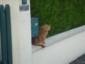 chat de la milaisse